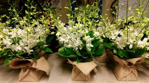 Orchids Wrapped in Hessian