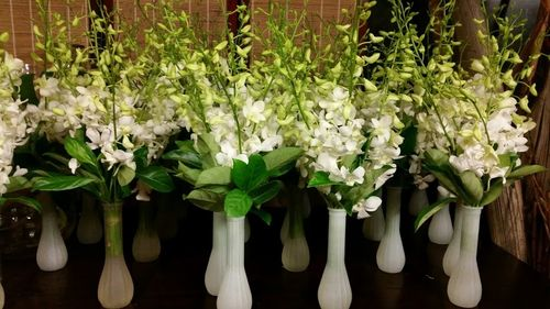 Bud Vase Arrangements with White Orchids