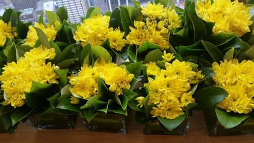 Yellow Chrysanthemums in Square Vases